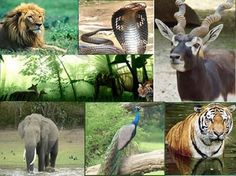 India Wildlife Tour an Incredible and Unimaginable Experience.