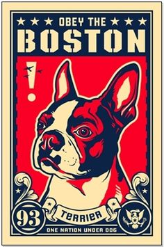 Obey the Boston Terrier!!! I have this hanging up by my dogs' house :)