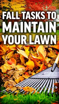 Fall Lawn Maintenance Tips Fall Lawn Care, Lawn Care Business, Types Of Grass, Pergola Pictures, Lawn Maintenance, Grass Seed, Pergola Shade, Pergola Designs, Landscaping Tips