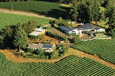 When Wendy and Don Lange first founded their namesake winery in it was one of the first wineries in the northern Willamette Valley's beautiful Dundee Hills. Oregon Wine Country, Wine Vineyards, State Of Oregon, Willamette Valley, Oregon Travel, Dundee, Wineries, Golf Courses, Tourism