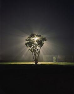 Tree Marina Del Rey CA. 2003 8.5x11 Fine Art por AmandaEFriedman, $40.00