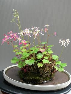 Simple Indoor Water Garden: Wabi-Kusa
