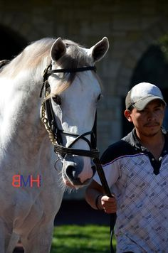 Have a picture of Madtap. AKA, the Keeneland crowd's Horse Crush