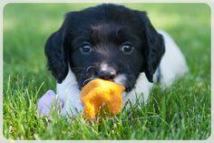 Awww, the little Sock Pup