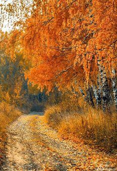 Farmland deciduous forest Road ##autumn