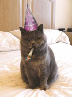 Find GIFs with the latest and newest hashtags! Search, discover and share your favorite Happy Birthday GIFs. The best GIFs are on GIPHY. Happy Birthday Animals, Happy Birthday Funny Cats, Animal Birthday, Cat Birthday Memes, Birthday Wishes, 21 Birthday, Birthday Images, Cake Birthday, Birthday Quotes