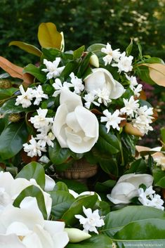 Magnolia and gardenia flower arrangement | ©homeiswheretheboatis.net #garden #flowers Gardenia Bush, Mosaic Flower Pots, Mosaic Pots, Mosaic Garden, Peach Dumplings, Mosaic Diy, Pebble Mosaic, Pebble Art, Magnolia Trees