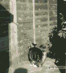 graceful leap