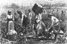 hardworking slaves in America