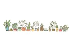 drawing Illustration art pot draw watercolor colour colourful Sketch plants watercolour Pots HERBS artists on tumblr observation potted plants pottery hand drawing potted house plants draw a city plant pots
