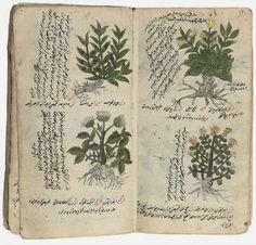 Milady's Outlander Love Affair!: Unraveling the Mysteries of Herbal Medicine