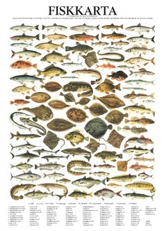 fish on map - Google Search