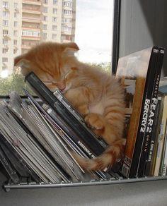 Gattino da mensola! Dorme beato tra libri e cd