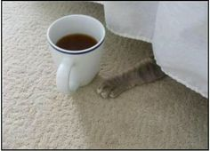 Does kitty want some coffee?