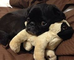 16 Adorable Dogs Whose BFFs Are Stuffed Animals