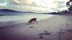 6 Dog-Friendly Vacation Destinations Around The World – iHeartDogs.com
