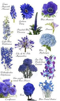 """Blue blooms More Have you ever found a picture of a bouquet and wondered, """"What is that flower?"""" Here is a collection of flower names sorted by color. A few bouquet examples are at the bottom and so… Blue Wedding Flowers, Beautiful Flowers, Wedding Blue, Trendy Wedding, Wedding Colors, Blue Flowers Bouquet, Delphinium Bouquet, Dendrobium Orchids, Wild Flowers"""