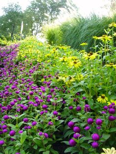 Summer annuals and perennials provide a pop of color. Landscaping Company, Beautiful Landscapes, Perennials, Color Pop, Garden Ideas, This Is Us, Backyard, Display, Gallery