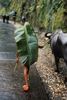 A Nepali man wears banana leaf as raincoat, Kathmandu.