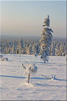 Landscape from Saariselkä, Finland. Photo Aili Alaiso Finland