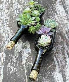 Excellent idea for a planter, just cut the bottle lengthwise with acetone instead of what you always see!