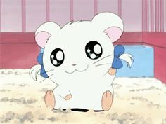 Hamtaro: Bijou gif - How could I ever forget this show I mean it's perfection Kawaii Anime, Kawaii Art, Manga Anime, Anime Cat, Cute Cartoon Animals, Anime Animals, Chibi, Gif Lindos, Image Manga