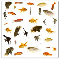 Find Fish Collection Many Different Tropical Fish stock images in HD and millions of other royalty-free stock photos, illustrations and vectors in the Shutterstock collection. Thousands of new, high-quality pictures added every day. Bikini Fishing, Sea Fishing, Fishing Tips, Fishing Tackle, Bass Fishing, Fishing Games, Fishing Boots, Fishing Basics, Fishing Stuff