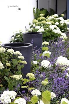greencube garden and landscape design, UK Landscape Design, Garden Design, Kerb Appeal, Grow Organic, Boarders, Back Gardens, Hydrangeas, Spring Flowers, Beautiful Images