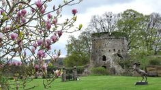A view of Usk Castle with statues and spring blossoms Stuff To Do, Things To Do, Riverside Walk, Visit Wales, Salmon Fishing, 11th Century, Spring Blossom, South Wales, Blossoms