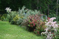 Janava Loves Garden: června 2016