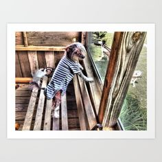 Chinese crested dog on Porch. - $24