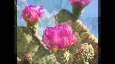 The Cactus Blossoms - Powder Blue
