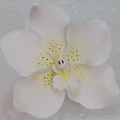 White Vanda Orchid by tulip27f, via Flickr