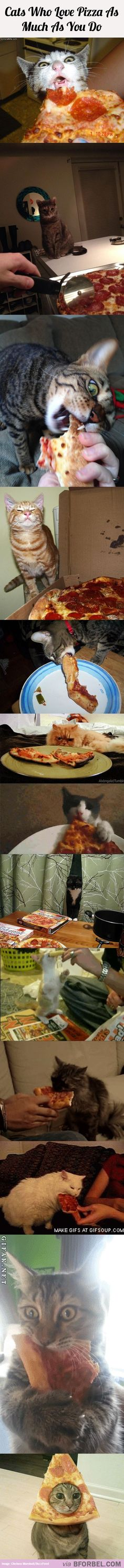 13 Cats Who Love Pizza As Much As You Do…