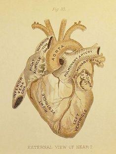 doeur dessin anatomie | -
