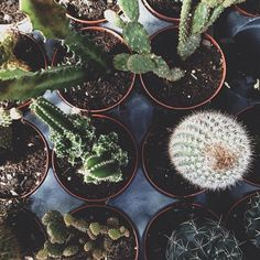 I love cactus'... they are my favorite plants! the best gift i could ever receive is a cactus :)