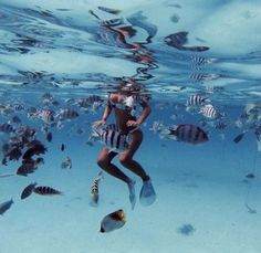 fishes, place, sea, travel, trip