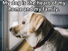 My Dog is the heart of my home and my heart.