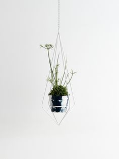 The Capra Designs Diamond plant hanger is made in Melbourne from powder coated steel. It can bring a bit of life to the interior or exterior of your home and add a touch of of classic elegance.