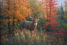 Reds of Fall - Whitetail Buck painting by Greg Alexander