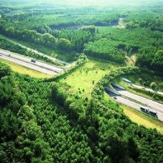 Ecoduct to save wildlife by helping them safely cross highways. Why don't we do this?
