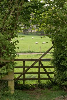 I love the view beyond this gate. Makes me want to walk through and explore.
