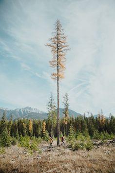 mikeseehagel:  In the woods. - mikeseehagel.com