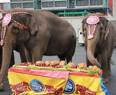 The timeline for retiring all elephants in the Ringling Bros. circus has been moved up.