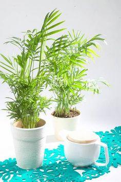 Begonia, Planter Pots, Women's Fashion, Balcony, Plants, Flowers, Fashion Women, Womens Fashion
