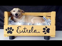 DIY Dog Bed (for small dogs!) made from a fruit box Diy Dog Bed, Old Suitcases, Dog Houses, Diy Stuffed Animals, Dog Supplies, Animal Design, Dog Walking, Beautiful Dogs, Pet Shop