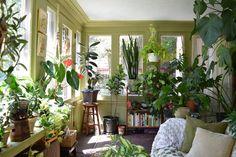 Natasha and the Plant-Filled Sunroom
