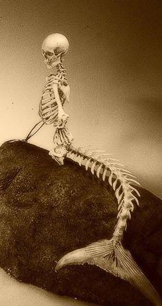 mermaid skeleton -- creepy, yet with a haunting beauty. Memento Mori, Mermaid Skeleton, Skeleton Art, Mermaids And Mermen, Mermaids Exist, Bizarre, Merfolk, Skull And Bones, Skull Art
