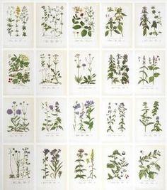 Sandberg Botanica Behang Het Sandberg Botanicabehang toont de mooiste bloemen en planten uit Zweden en omgeving.In totaal 234 bloemen en planten. Schitterend Herbarium behang!  Collectie: Sandber...