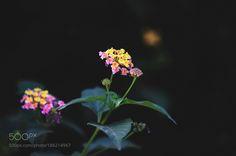 Flowers by ibrahimfathi #nature #mothernature #travel #traveling #vacation #visiting #trip #holiday #tourism #tourist #photooftheday #amazing #picoftheday
